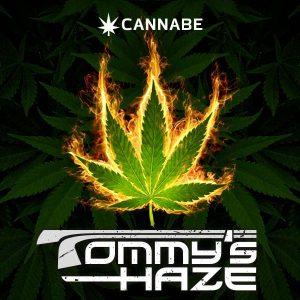 Tommy's Haze-3g