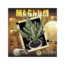 Buddha Seeds Magnum Auto Femminizzata 10 Semi