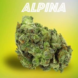 Alpina-2g