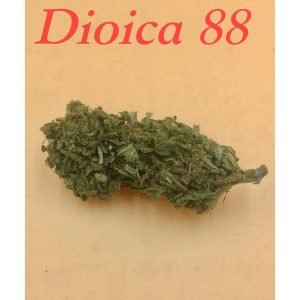 Dioica 88-2g