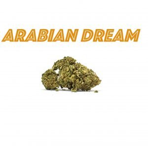 Arabian Dream Indoor 2g