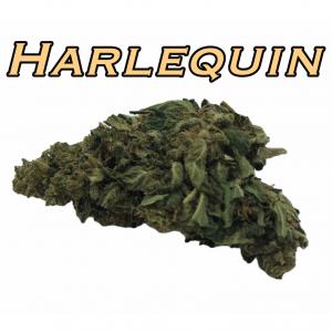 Harlequin