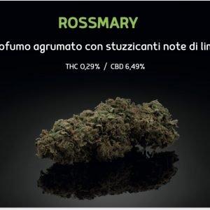 Rossmary 3g