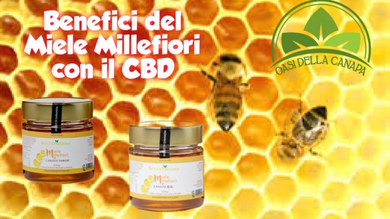 Il miele al cbd funge come antiossidante, antinfiammatorio, antibatterico, antisettico, ansiolitico, anticonvulsivante