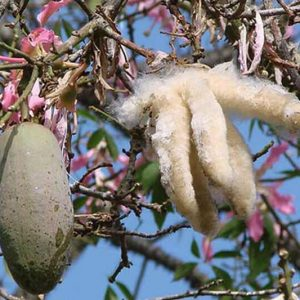 Cuscino in Kapok Bio