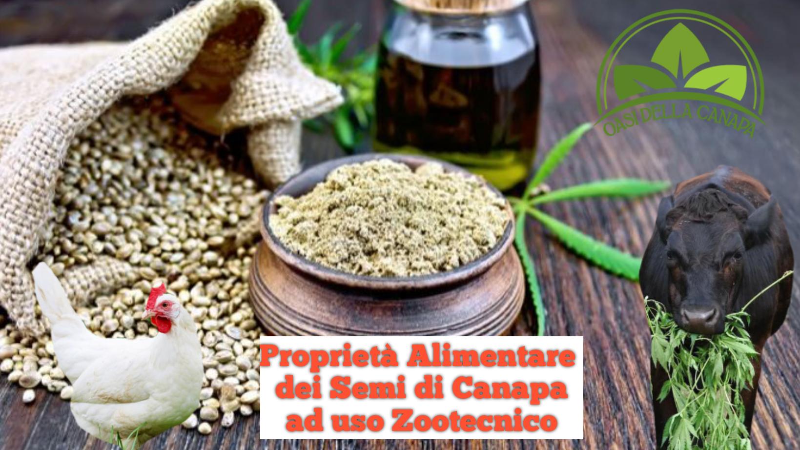 Proprietà Alimentare dei Semi di Canapa ad Uso Zootecnico