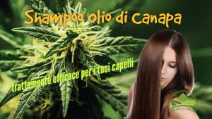 Con l'utilizzo continuo dello shampoo con olio di cannabis i tuoi capelli saranno più resistenti e elastici.