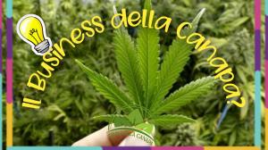 L'industria della canapa in Italia è in costante crescita così come in tutto il mondo, quindi diventare un imprenditore, commerciante o rivenditore di canapa legale è decisamente un'opportunità unica e imperdibile in quanto la canapa è il nuovo oro verde nei mercati