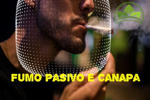 Un fumatore passivo è quella persona che è esposta involontariamente al fumo di un altro, bisogna precisare che respirare il fumo canapa come un'esposizione secondaria può creare danni al cuore