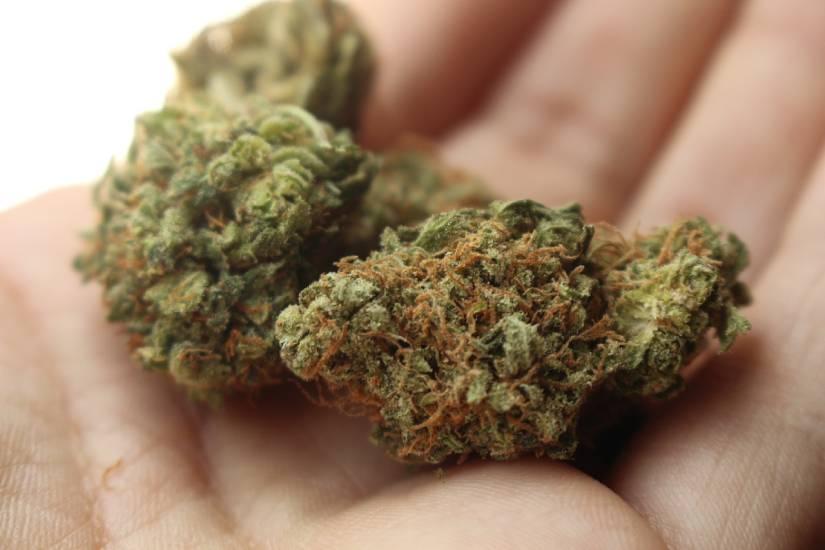 Disegno di Legge Cannabis: nuove proposte per legalizzare la marijuana