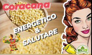 Cucchiaio pieno di coracana, cereale energetico & salutare. Oasi della Canapa