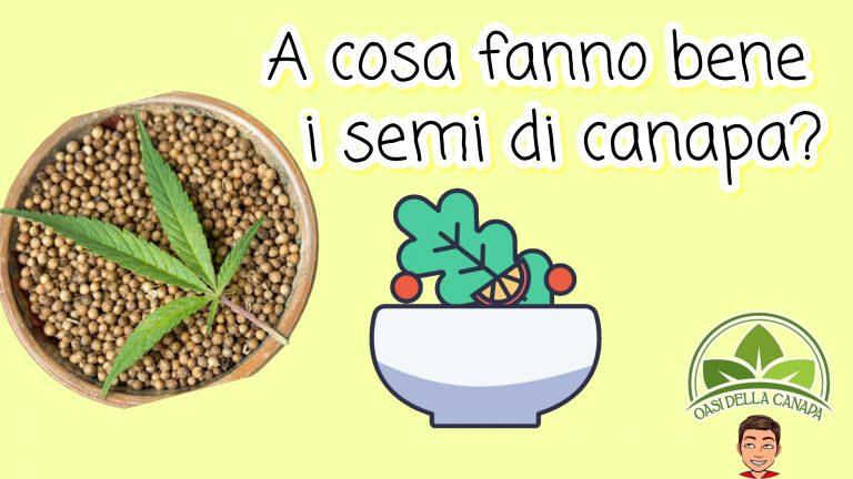 Piatti con dei semi di canapa e l'omino di Oasi della Canapa