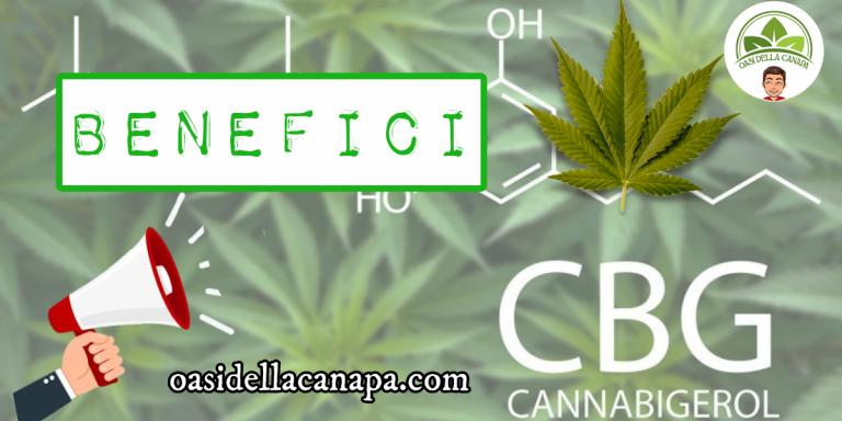 Il cannabigerolo CBG è un fitocannabinoide del gruppo di componenti chimici della cannabis